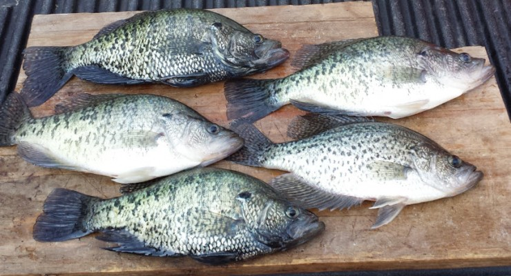 Lake o the pines, crappie fishing, Jefferson texas