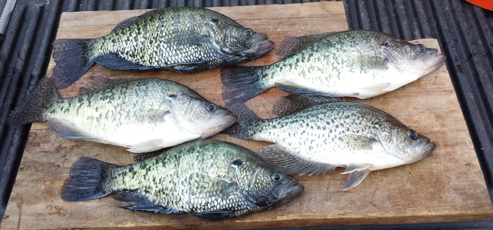 Lake o the pines crappie lake o 39 the pines for Crappie fishing texas